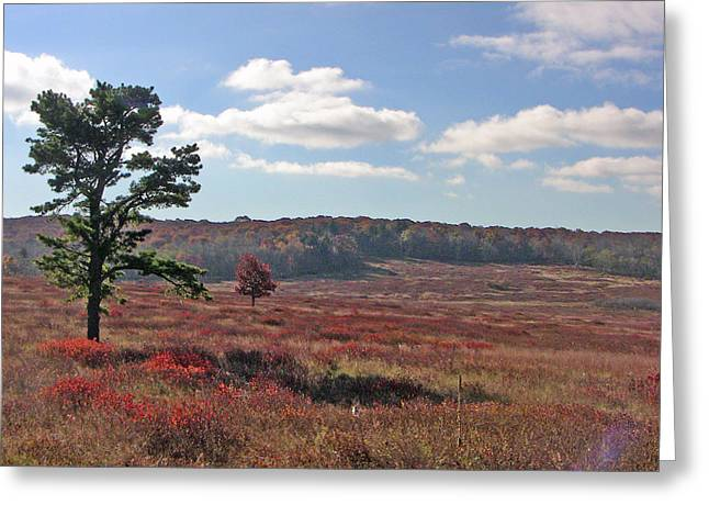 Greeting Card featuring the photograph Autumn At The Meadow by Shirin Shahram Badie