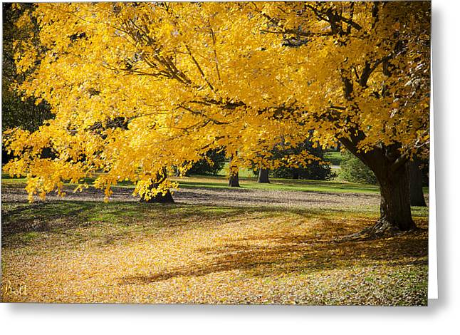 Autumn At Wildwood Park No.5 Greeting Card by Christine Belt