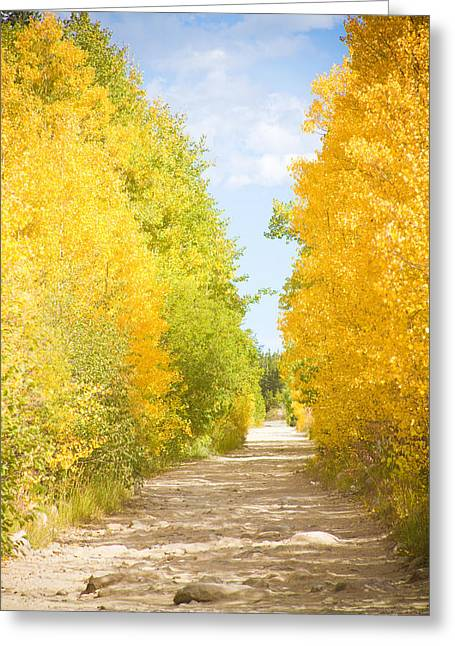 Autumn Back County Road Greeting Card by James BO  Insogna