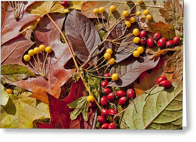 Autumn Berries And Leaves Background  Greeting Card by Aleksandr Volkov