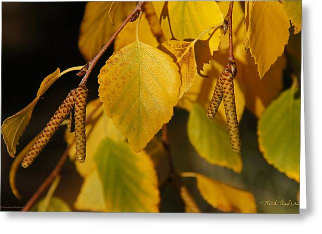 Autumn Birch In Southern Oregon Greeting Card by Mick Anderson
