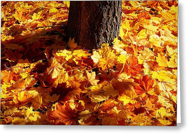 Greeting Card featuring the photograph Autumn Carpet by Linda Edgecomb
