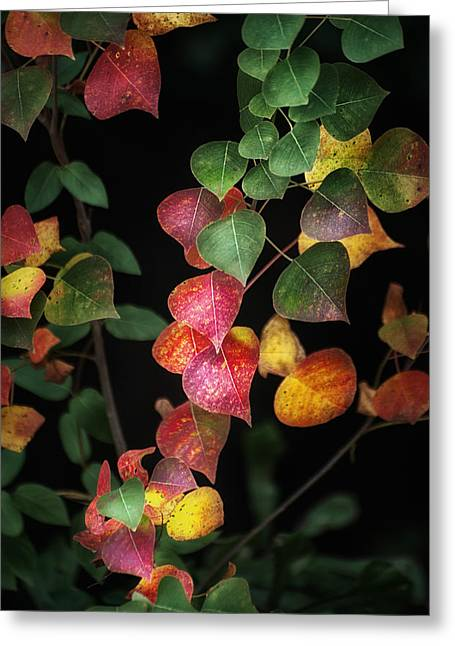 Autumn Color Greeting Card by Brenda Bryant