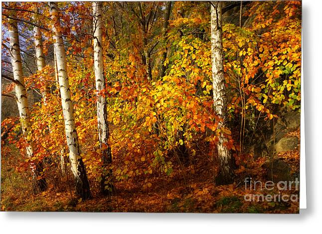 Autumn Colorplay Greeting Card