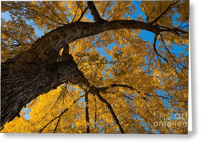Autumn Colors 4 Greeting Card by Terry Elniski