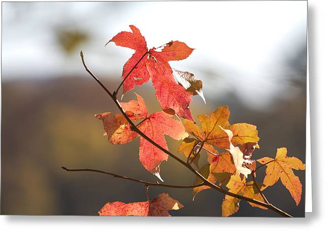 Autumn Colors-arkansas Greeting Card by Douglas Barnard