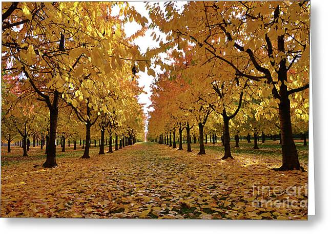 Autumn Colors At He's Best Greeting Card by Bruno Santoro