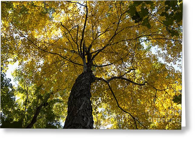 Autumn Colors Greeting Card by Darleen Stry