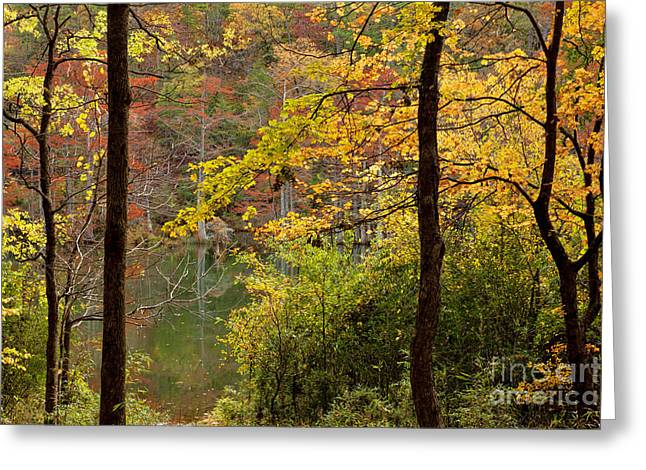 Autumn Colors In The Forest Greeting Card by Iris Greenwell