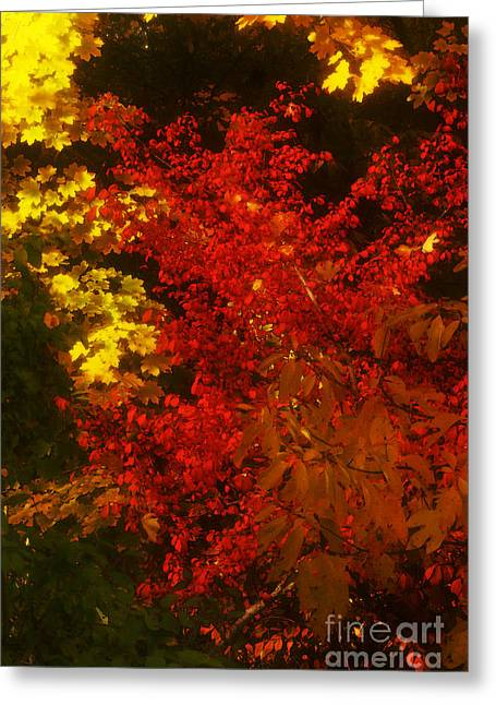 Autumn Colors Greeting Card by Jeff Breiman