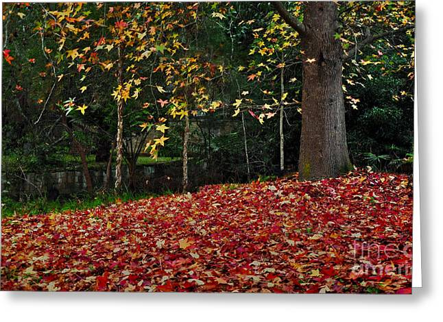 Autumn Colors Greeting Card by Kaye Menner