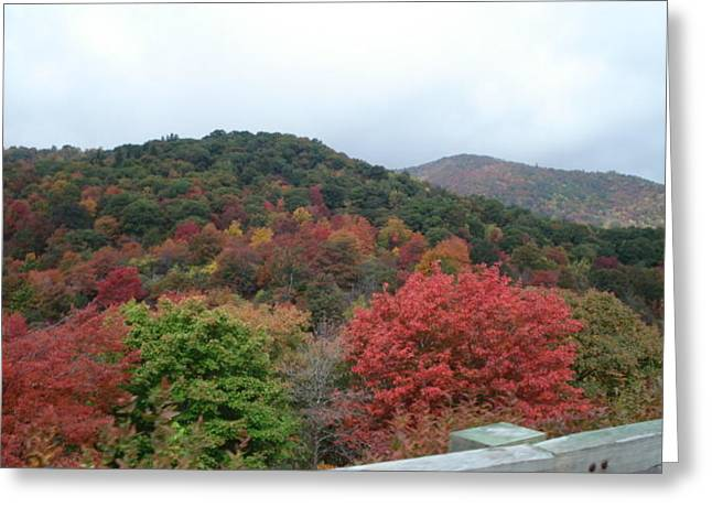 Autumn Colors Greeting Card by Val Oconnor