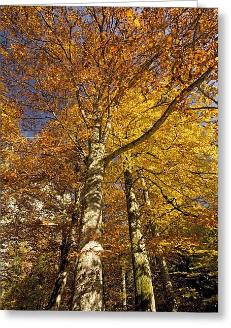 Autumn Colour Greeting Card by Bob Gibbons