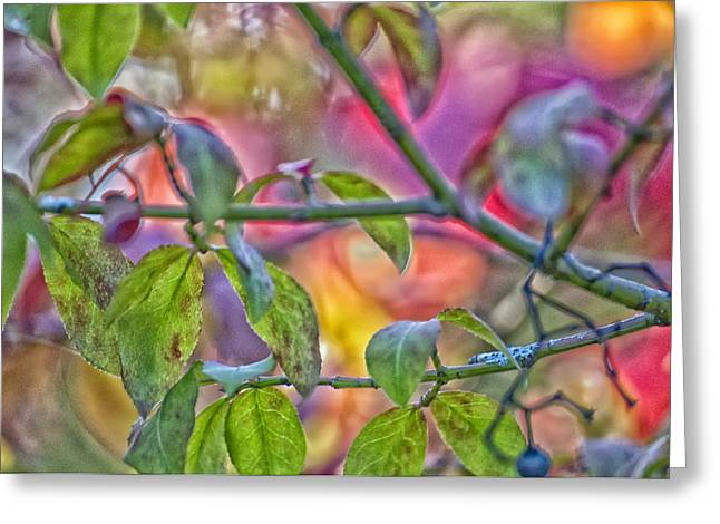 Autumn Crayolas Greeting Card by Ross Powell