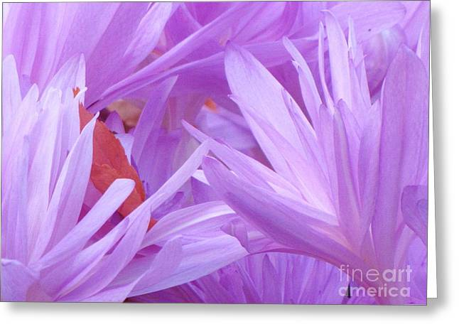Greeting Card featuring the photograph Autumn Crocus by Michele Penner