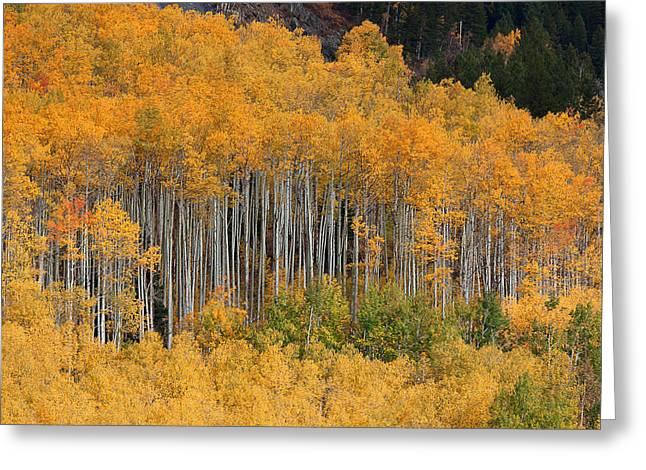 Greeting Card featuring the photograph Autumn Curtain by Jim Garrison