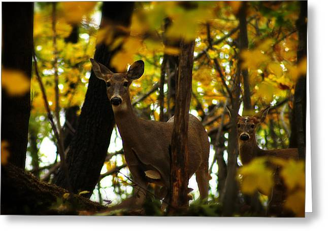 Autumn Doe Greeting Card by Scott Hovind