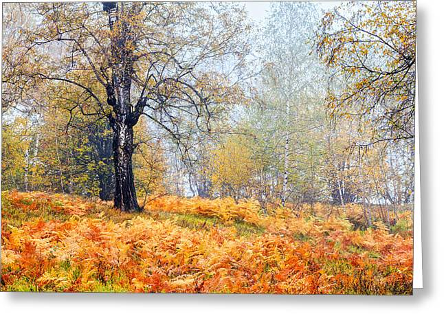Autumn Dreams Greeting Card by Evgeni Dinev