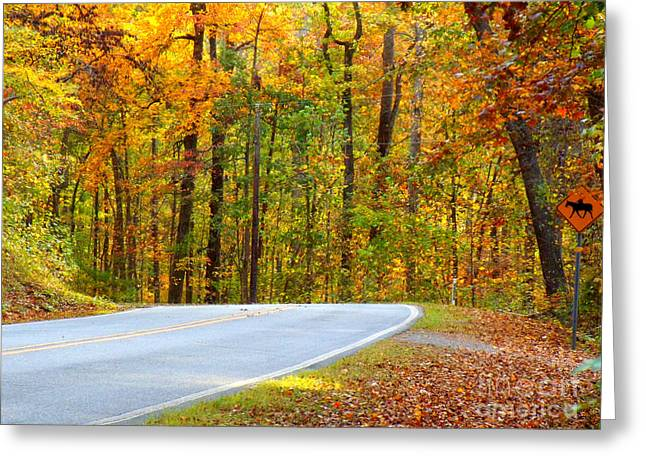 Greeting Card featuring the photograph Autumn Drive by Lydia Holly