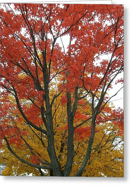 Autumn Duel Greeting Card by Todd Sherlock