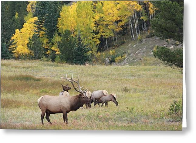 Autumn Elk Greeting Card