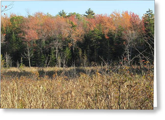 Autumn Field And Pine Greeting Card by Loretta Pokorny