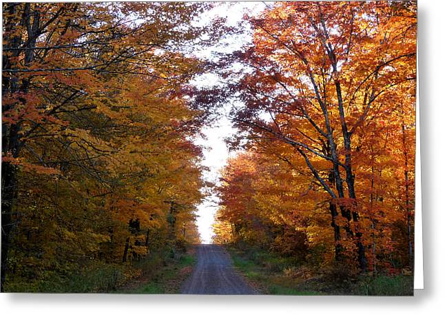 Autumn Fire Greeting Card by Terry Eve Tanner