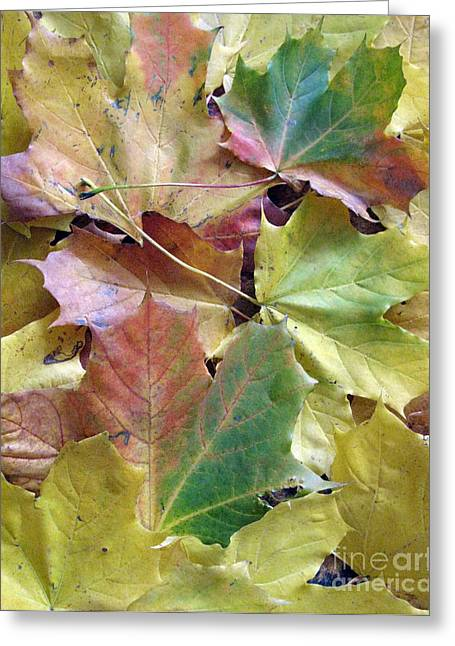 Autumn Foliage Greeting Card by Ausra Huntington nee Paulauskaite