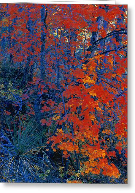 Autumn Foliage Greeting Card by Don Hammond