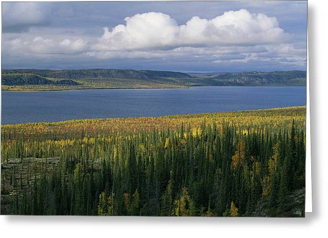 Autumn Foliage Surrounds Campbell Lake Greeting Card by Raymond Gehman