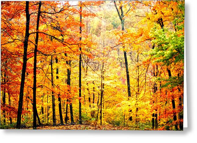 Greeting Card featuring the photograph Autumn Forest by Randall Branham
