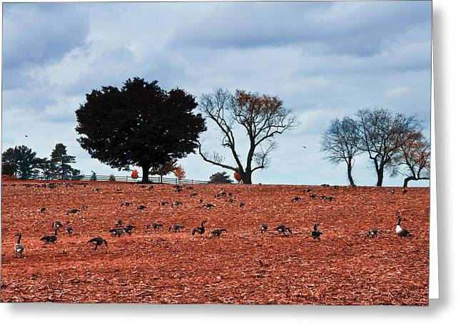 Autumn Geese Greeting Card by Bill Cannon