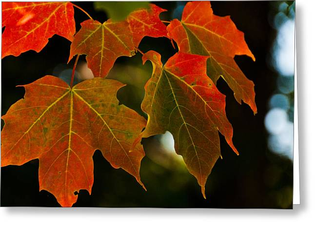 Greeting Card featuring the photograph Autumn Glory by Cheryl Baxter
