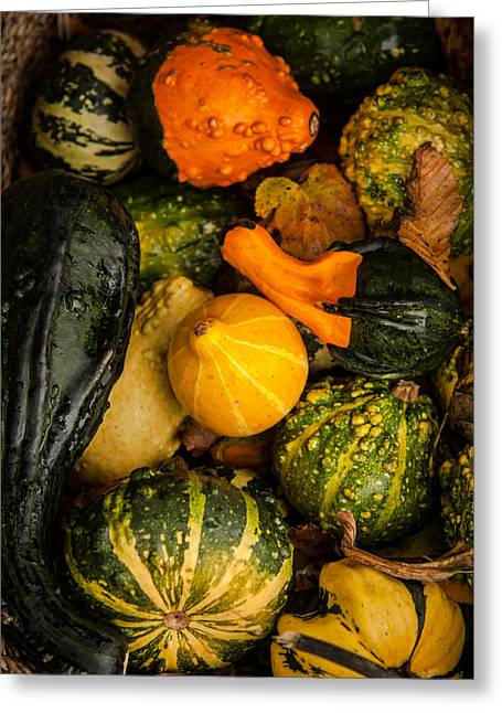 Autumn Gourds Collage Greeting Card by Matt Dobson
