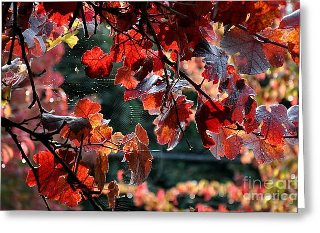 Autumn Grapes And Spider Webs Greeting Card