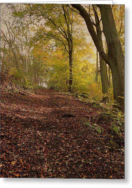 Autumn In Brantingham Woods Greeting Card