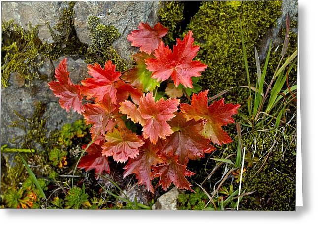 Greeting Card featuring the photograph Autumn In Canada by Sylvia Hart
