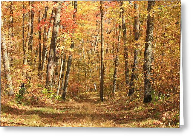 Greeting Card featuring the photograph Autumn In Minnesota by Penny Meyers
