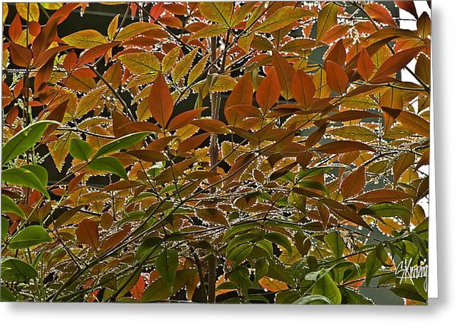 Autumn In Muttart Greeting Card
