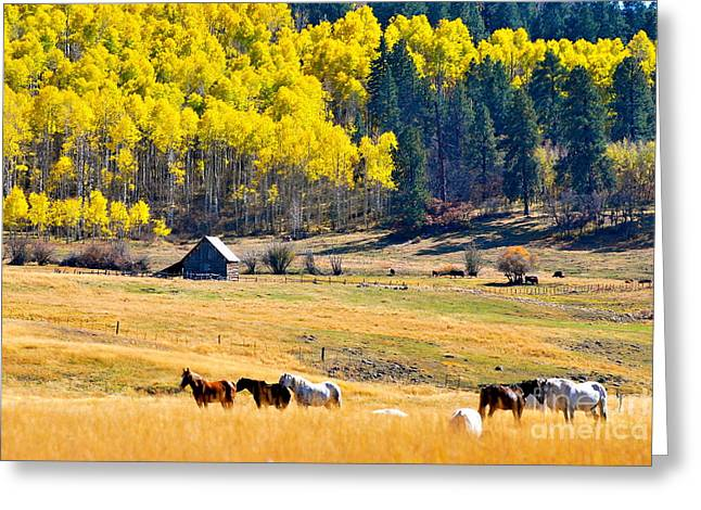 Autumn In Pagosa Greeting Card