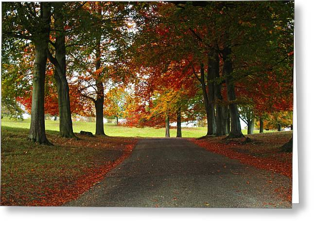 Autumn In Studley Deer Park Greeting Card by Steve Watson