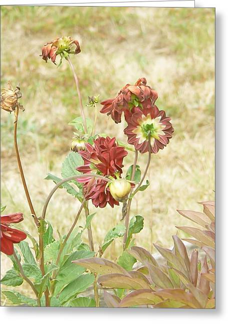 Autumn In The Garden  Greeting Card by Pamela Patch