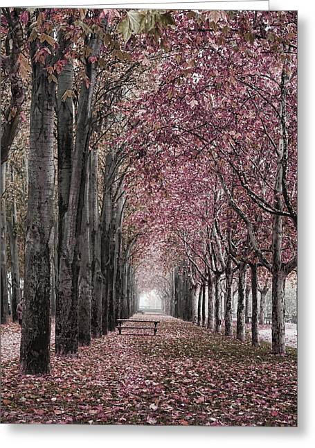 Autumn In The Grove Greeting Card