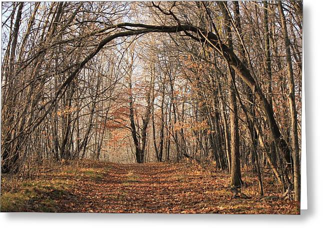 Greeting Card featuring the photograph Autumn In The Woods by Penny Meyers