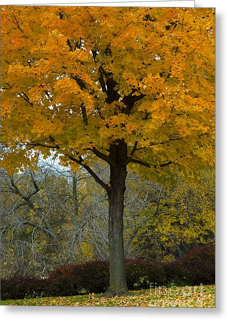 Autumn In Wildwood Park Greeting Card by Christine Belt