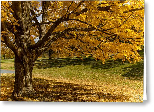 Autumn In Wildwood Park No.2 Greeting Card by Christine Belt