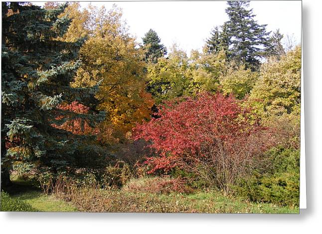 Greeting Card featuring the photograph Autumn Landscape  by Bogdan Floridana Oana