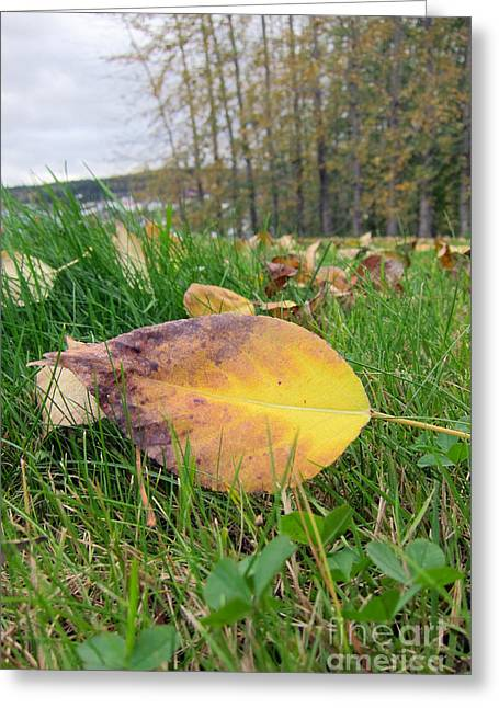 Autumn Leaf On Green Greeting Card by Michelle Bergersen
