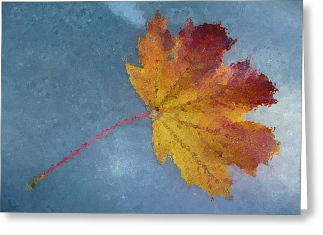 Autumn Leaf Under Glass Greeting Card by Margie Avellino
