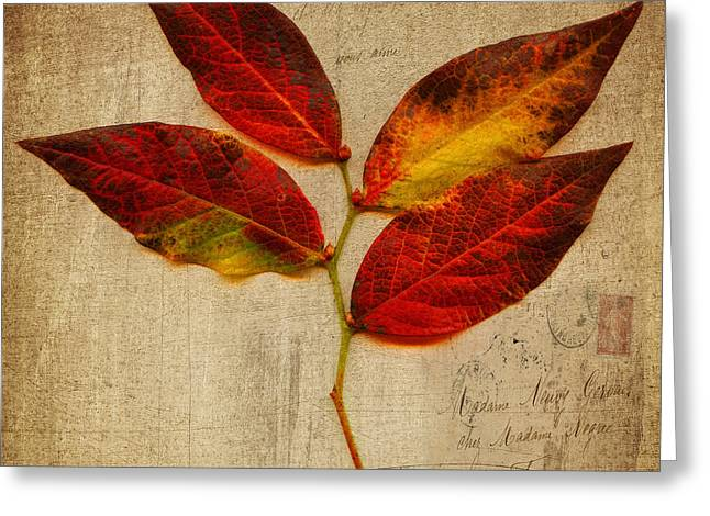 Autumn Leaf With Texture Greeting Card